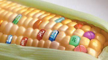 Ricerca e OGM: lettera di ANBI a Renzi e al ministro Martina