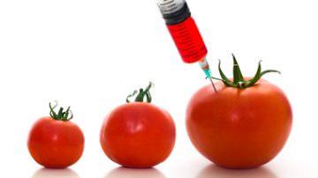 """Accordo europeo per vietare gli OGM a livello nazionale. Greenpeace e Slow Food: """"E' una trappola!"""""""