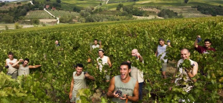 Vino san patrignano nacque con un sangiovese precisazioni aggiuntive del 9 giugno - Mobili san patrignano ...
