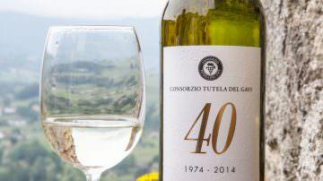 La Doc GAVI, grande Bianco Piemontese, compie 40 anni
