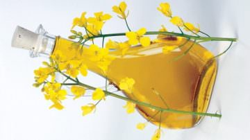 Più olio di colza, meno malattie cardiache