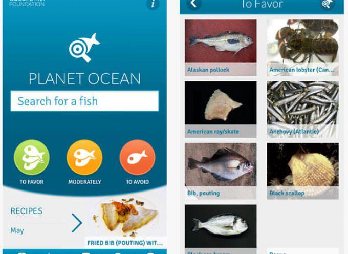 Pesce, ecco Pianeta Mare: un'App per scegliere in maniera sostenibile