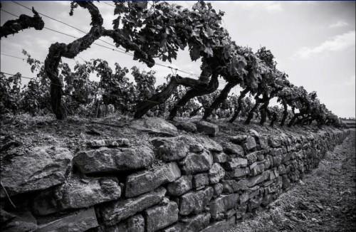 "Azienda vinicola ""Tenuta Sette Ponti"""
