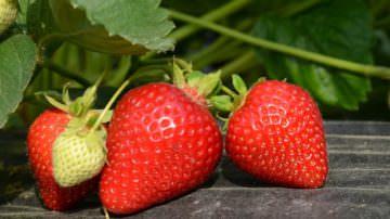 """Pubblicato il volume """"Ortaggi, fragole e piccoli frutti. Coltivazione sostenibile in Piemonte"""""""