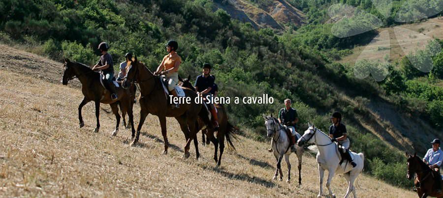 La magia del territorio si scopre a cavallo: Terre di Siena e turismo equestre