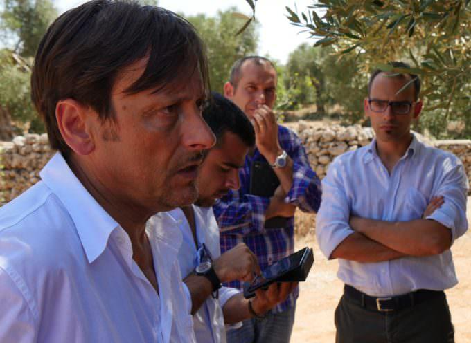 """Ulivi, simboli di Pace, attaccati da Xylella: Dario Stefàno """"Sfida durissima. Road map con il ministro Martina"""""""