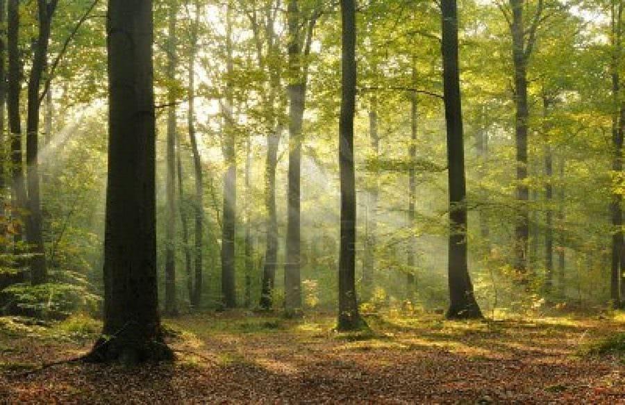 Il Cantico della Natura: Il bosco umano, un albero salva un albero