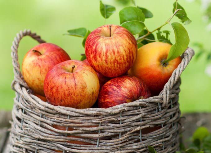 Valtellina: Trappole sessuali per combattere il più pericoloso parassita delle mele