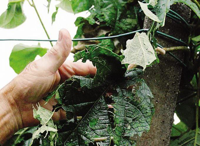 Maltempo e agricoltura: Piove sul bagnato?