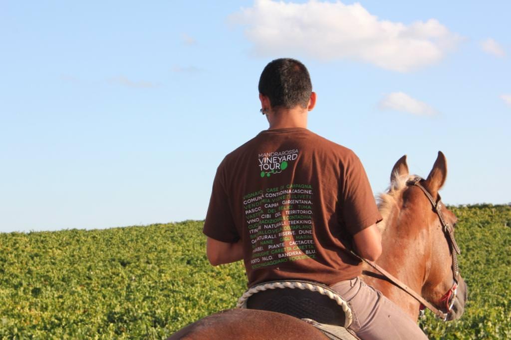 Menfi: Mandrarossa Vineyard Tour, un emozionante percorso dove nascono i vini Mandrarossa