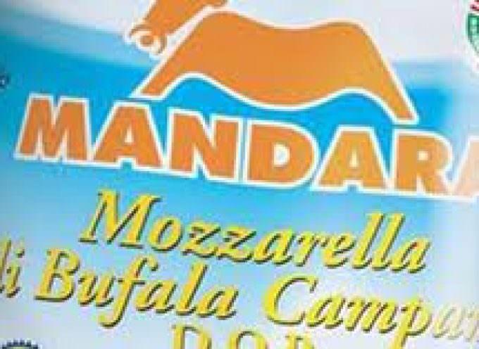 """Mandara: """"Buffalo mozzarella making mix"""" è il principale ingrediente di una tecnica casearia nelle mani degli artigiani che trasformano il latte in """"oro bianco"""""""