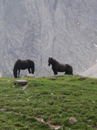 Cavalli di Mérens in quota