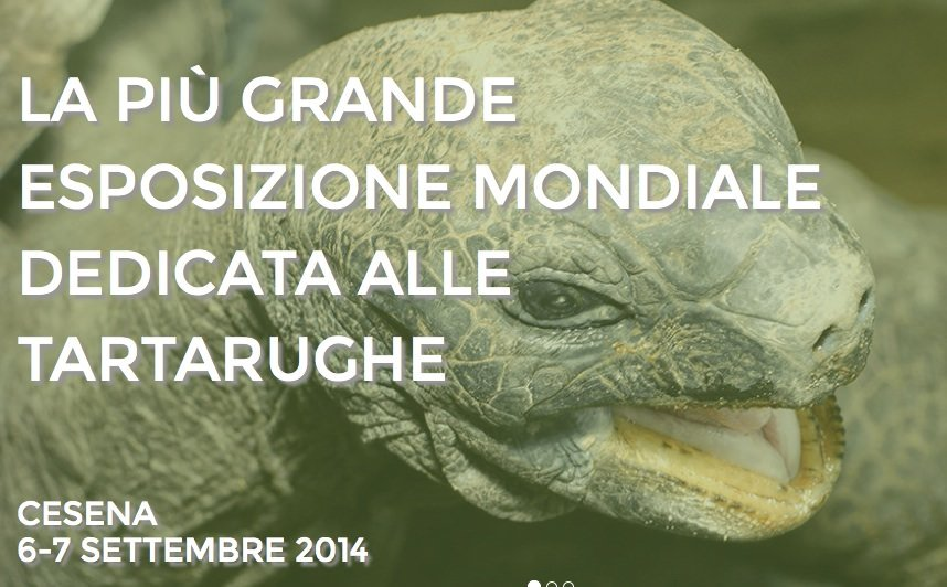 Tartarughe e Carpe Koi a Cesena dal 6 al 7 settembre 2014