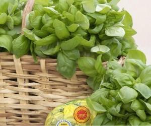 Agricoltura in piazza: eccellenze agroalimentari della Liguria in mostra a GENOVA