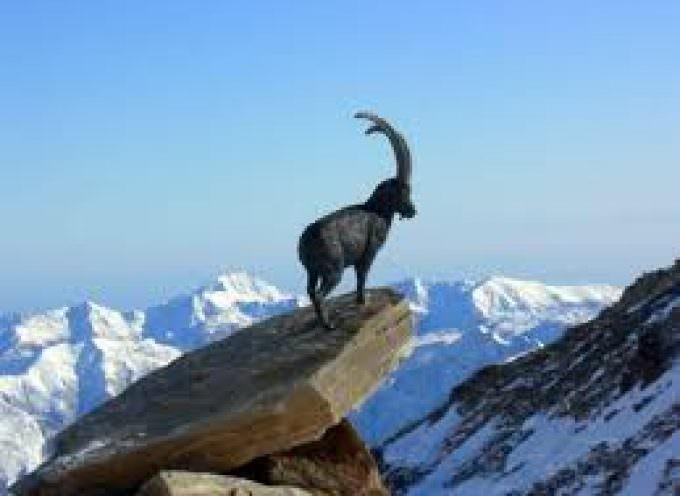 Strada Gran Paradiso: anche a  settembre una serie di itinerari guidati alla scoperta delle Valli del Canavese