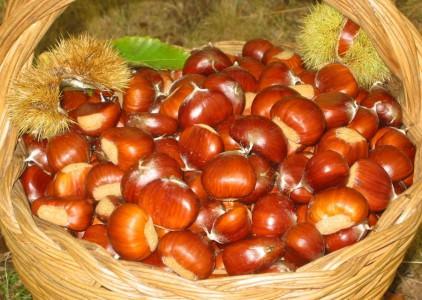 Ognissanti in provincia di Rieti: Ascrea e Canterano festeggiano le caldarroste