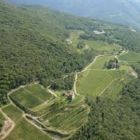 Merlot Rocol: dai vigneti delle Piccole Dolomiti di Borgo dei Posseri