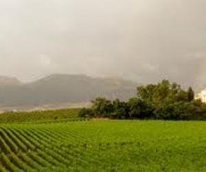 In Sicilia anche d'inverno, in campagna e in cantina nelle tenute Baglio di Pianetto