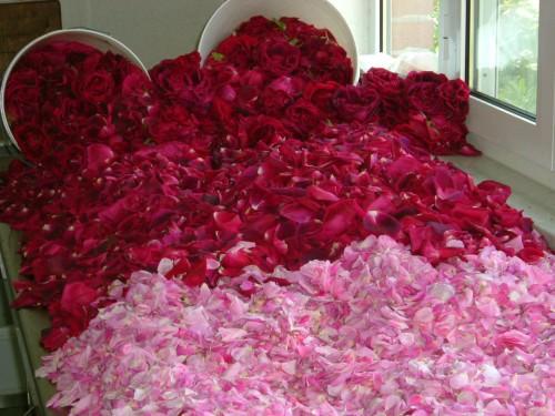 Petali di rose per sciroppo