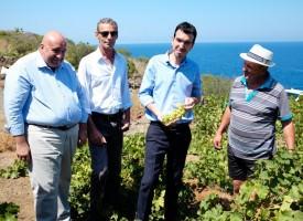 La Vite ad Alberello di Pantelleria è Patrimonio dell'Unesco. La soddisfazione dei vertici dell'IRVO per l'esito della candidatura