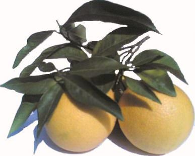 Arance varietà naveline