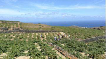 Pantelleria: meta ambita per i turisti del Vino… grazie all'alberello adottato dall'Unesco