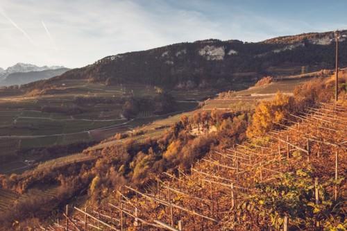 Autunno in Trentino. Vini Del trentino, Consorzio Di Tutela. Novembre 2014