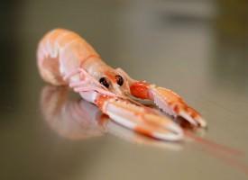 L'Ancora Store: direttamente dalla Sicilia pesce di mare con la carta d'identità