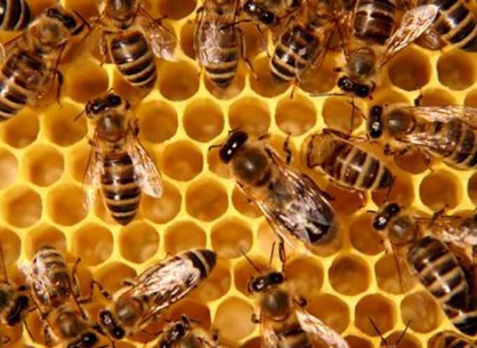 Da lunedì 19 gennaio è operativa l'anagrafe delle api italiane