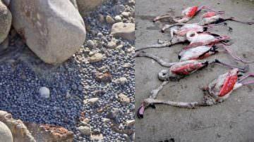 ONU: basta piombo nelle cartucce da caccia… a quando: Basta ingiustizie?