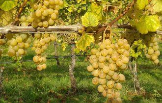 Agricoltura biologica: meno diffusa più redditizia