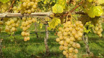 I vini faentini della cantina La Sabbiona protagonisti all'Institute of Directors Pall Mall di Londra