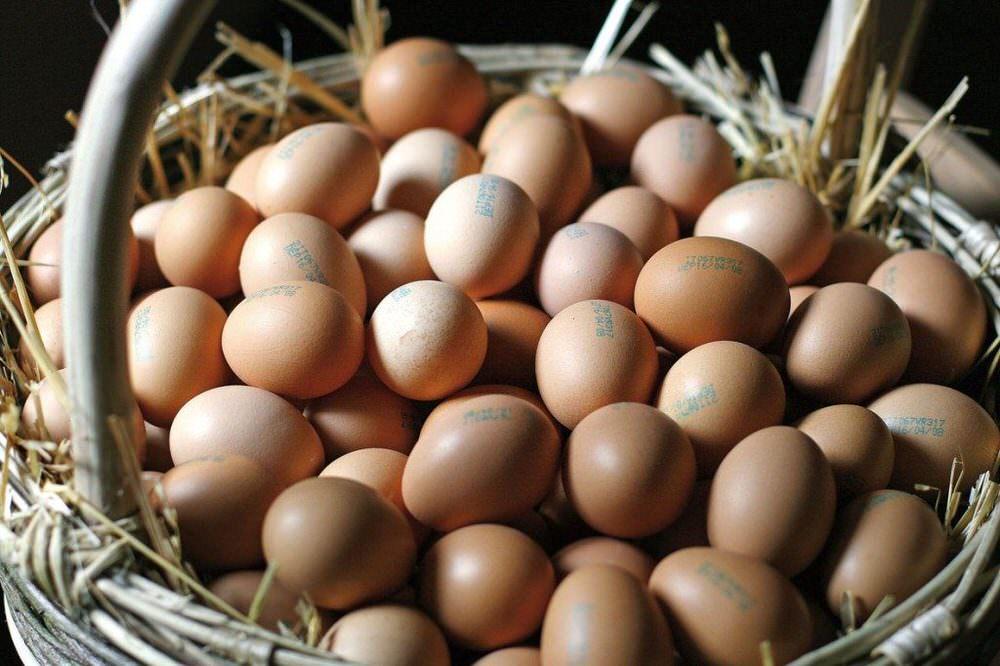 Expo, padiglione Coldiretti: Venerdì 9/10 è la Giornata mondiale dell'uovo
