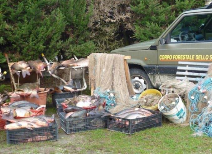 Attila del Po: pesca da Barbari fa razzia indiscriminata di ogni specie ittica