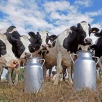 Il latte: da dove, come e perchè – Impariamo a conoscerlo con Marco Di Lorenzi