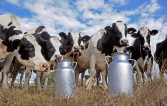 """Latte, allevamenti in Lombardia: Scatta il """"salva stalle"""""""