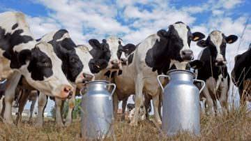 """QUALE LATTE BEVI? Quale futuro per il latte italiano dopo le """"Quote latte""""?"""