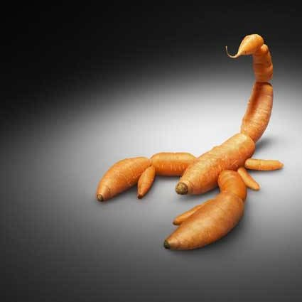 CAROTA OGM