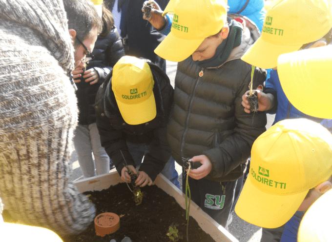 Passione per l' orto: Anche i bambini si divertono a coltivare piccole piante di ortaggi