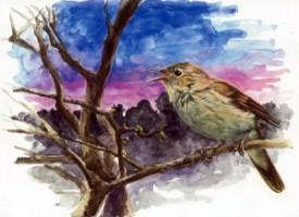 L'usignolo: un gorgheggio melodioso nelle notti di primavera