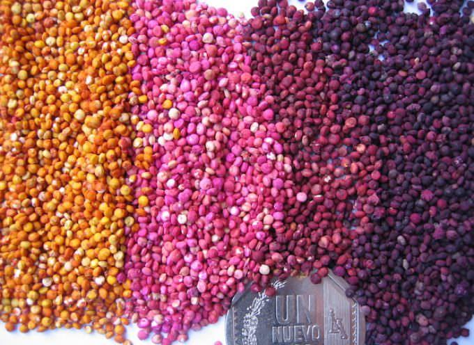 News dal Perù: Quinoa, export + 600% – Quando si potrà coltivare in Italia?
