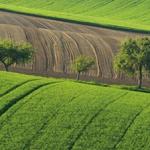 Agricoltura, un bando per i giovani