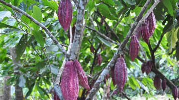 Expo 2015: Domori è Official Event Sponsor del Cluster Cacao e Cioccolato