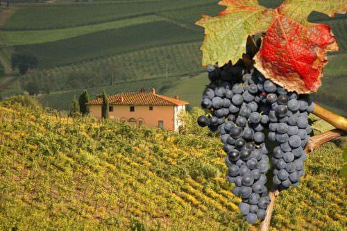 Profumo di Vino