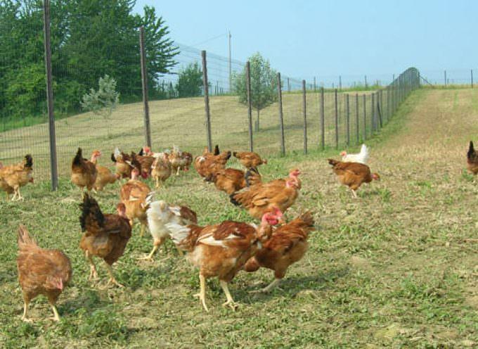 """""""COQ Nice Chicken"""", apre il locale più ruspante di Milano, con menu interamente a base di pollo"""