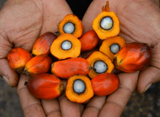 Palma-Leaks, dal 2004 'Big Food' sapeva del pericolo cancro, per bambini e adolescenti, nei cibi con l'olio di palma