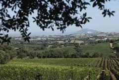 Vino: Anna's Secret è la risposta italiana ai grandi rosé francesi