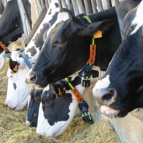 Zootecnia del futuro: Il Parco Tecnologico di Lodi presenta il progetto DairyFarm
