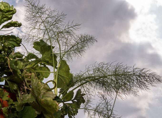 Veve, l'orto verticale da balcone: Novità oggi a Expo