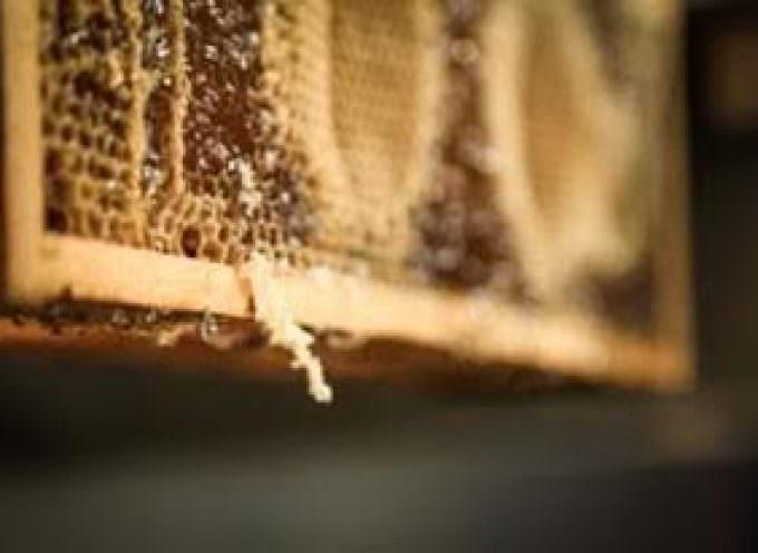 Con il progetto Bee My Future di LifeGate Rigoni di Asiago protegge le api